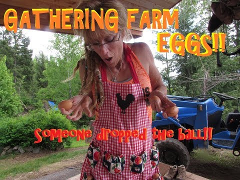 GATHERING EGGS ON THE OFF GRID HOMESTEAD: SOMEONE DROPPED THE BALL!!!!