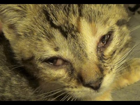 What are some natural treatments for cough in cats?