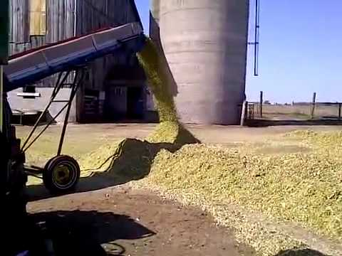Making Cow Feed - Corn Silage