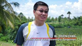UNA DEKADA The Dragon Fruit Growers Lucena HD