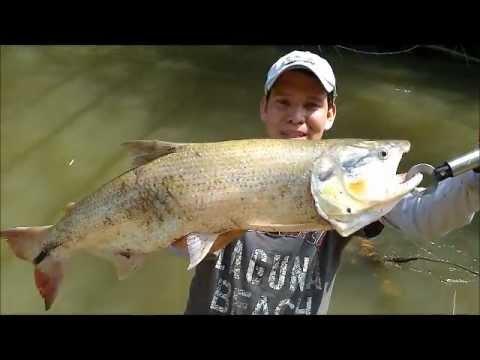 pesca picuda en  colombia