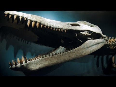 What Ultra High Speed Penguin Footage Reveals About Pliosaurs