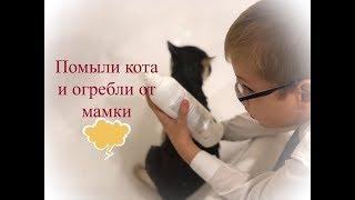 #ярославкиныбудни Сделали доброе дело. Помыли кота.