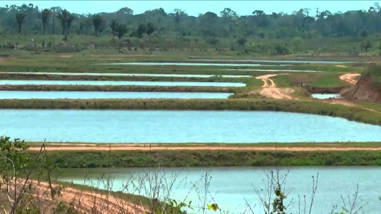 O projeto da produ o de a a com a piscicultura no estado for Tanques para cachamas