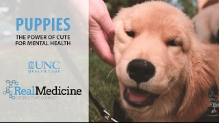 Puppies: The Power of Cute for Mental Health