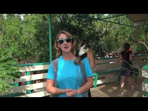 """Get to know Crane Point's Resident Marine Biologist, Danielle """"Dani"""" Miller, Marathon, Florida"""