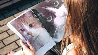 興味深い検証!オス猫が可愛い鳴き声でオス猫を呼ぶ?猫の定説が覆るか thumbnail