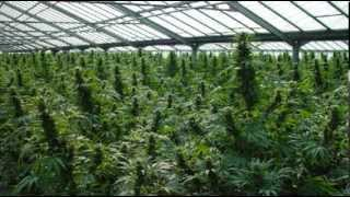 Ending cannabis prohibition benefits economy more than legalizing corrupt scheme