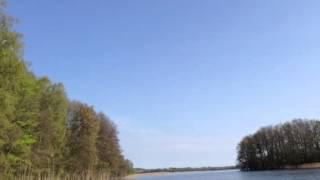 Seeadlerpaar am Carwitzer See