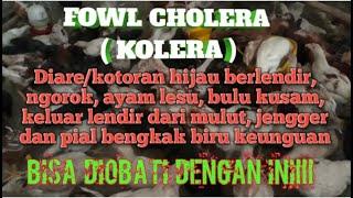 Kolera adalah diare akibat infeksi bakteri yang bernama Vibrio cholerae. Penyakit ini dapat terjadi .