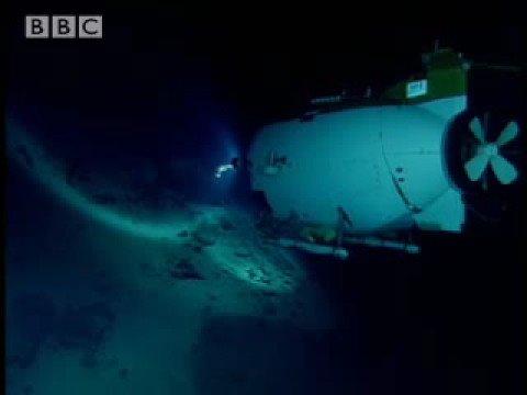 Rare life on the sea floor The Ass BBC Wildlife