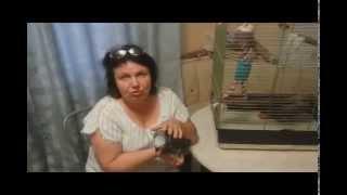 Татьяна Троицкая: Жако- информация к размышлению