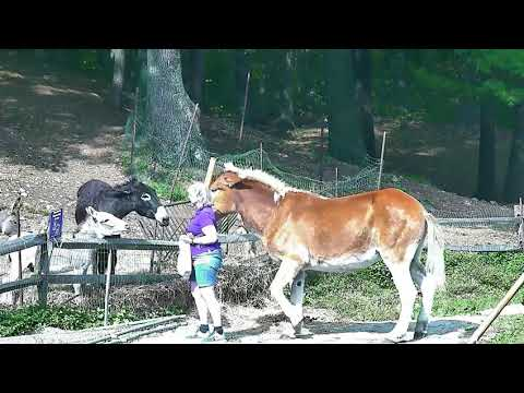 Cp Lee visits herd b4 140pm 1072017 Carlene appears couple of times