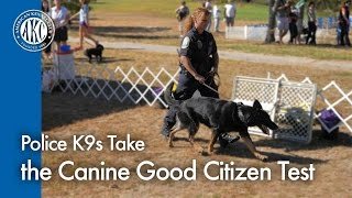 Police K9s Take The Canine Good Citizen Test