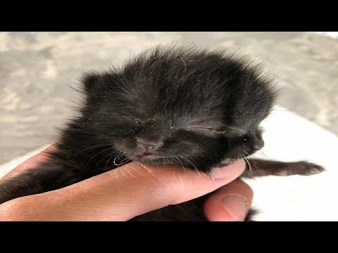 'İki yüzlü' kedi yavrusu Duo hayata tutunmaya çalışıyor