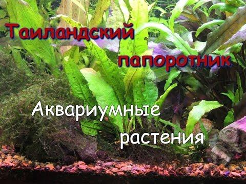 Папоротник – описание с фото растения; его свойства