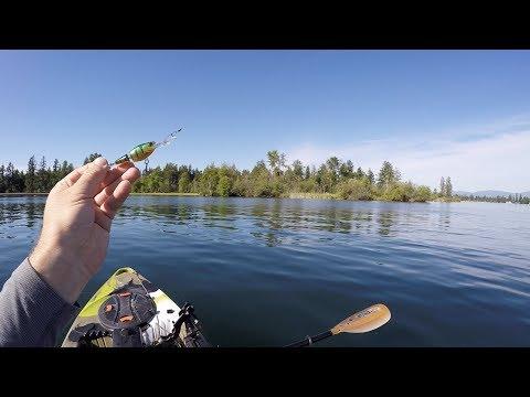Hunting Lake Tapps Tiger Muskie! Ep.1