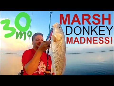 """KAYAK FISHING """"MARSH DONKEY MADNESS"""" Redfish fishing the Marsh Texas"""