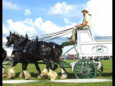 Six Clydesdale Horses Pull Big Shoe...