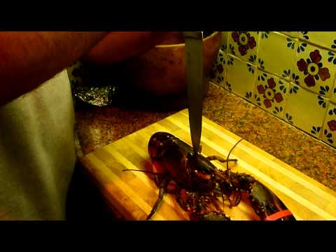 Killing A Lobster Humanely
