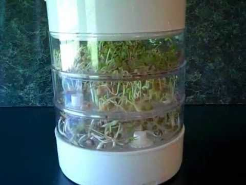 Bean Sprouter ~Easy + Delicious! Sprouts in Just 4 Days!