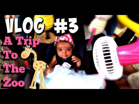 VLOG #3 - Family Road Trip to the Cincinnati Zoo!