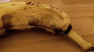 Паук в банане