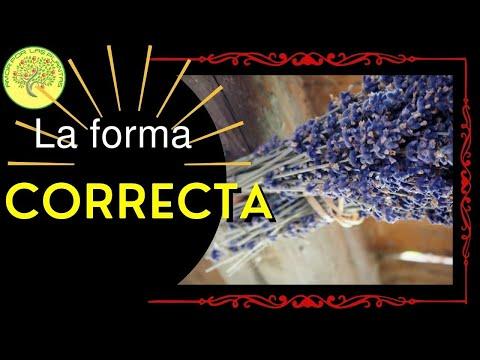 Secado correcto de hierbas medicinales youtube for Mezclas de plantas medicinales