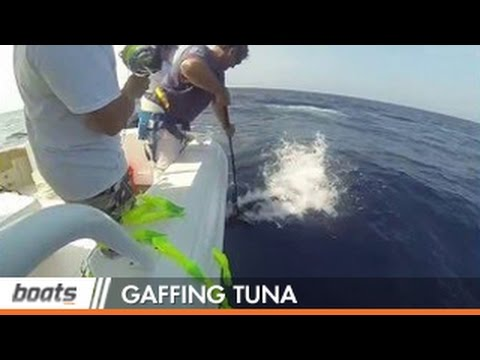 How To Fish: Tips For Gaffing Tuna