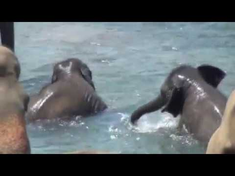 Bath time fun - Super cute baby elephant - YouTube