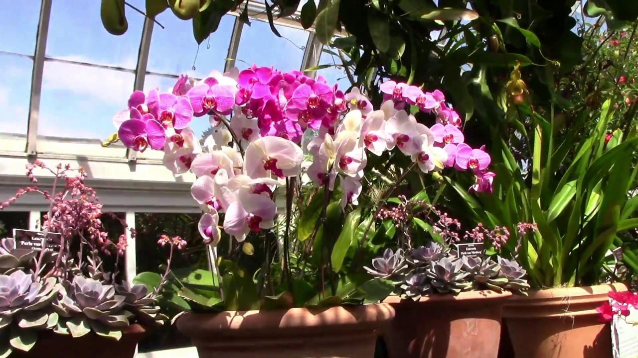 Orchids Show Nyc 2019 Bronx New York Botanical Garden Youtube