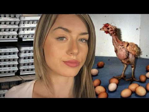 What's Wrong With Eggs? The Truth About The Egg Industry