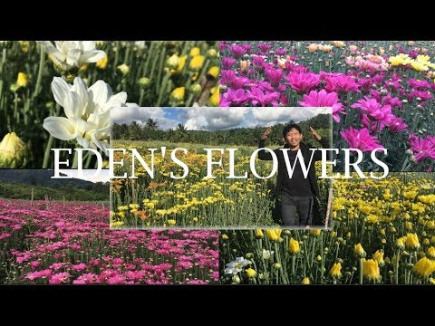 #VLOG17- EDEN'S FLOWER FARM- TUPI, SOUTH COTABATO