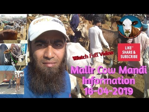 Malir Cow Mandi Karachi Latset Update 16 April 2019