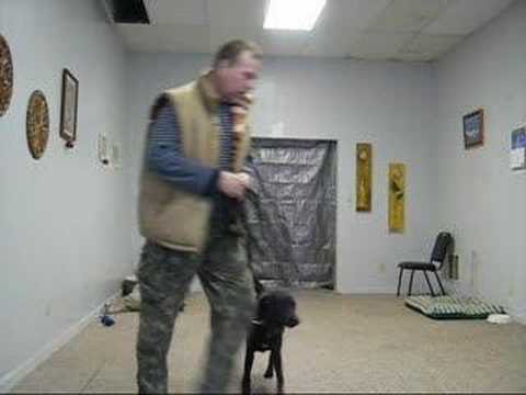 Fear Biter Dog Training