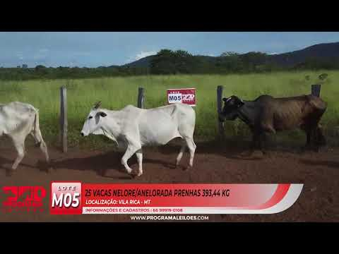 LOTE M05