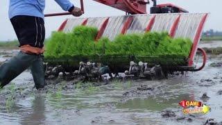 Future Agriculture (Future Rice Program)