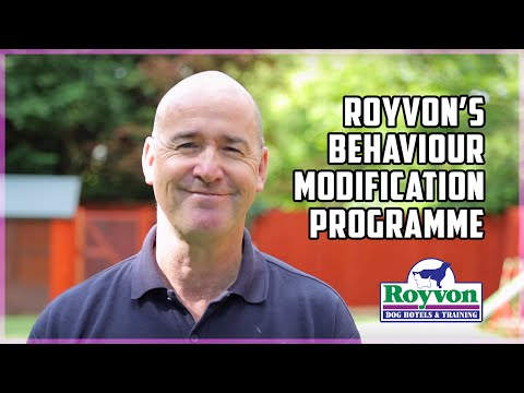 Learn Why Royvon's So Successful At Resolving Dog Aggression