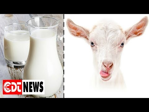 13 Proven Benefits Of Goat Milk To Boost Your Health | CDT NEWS