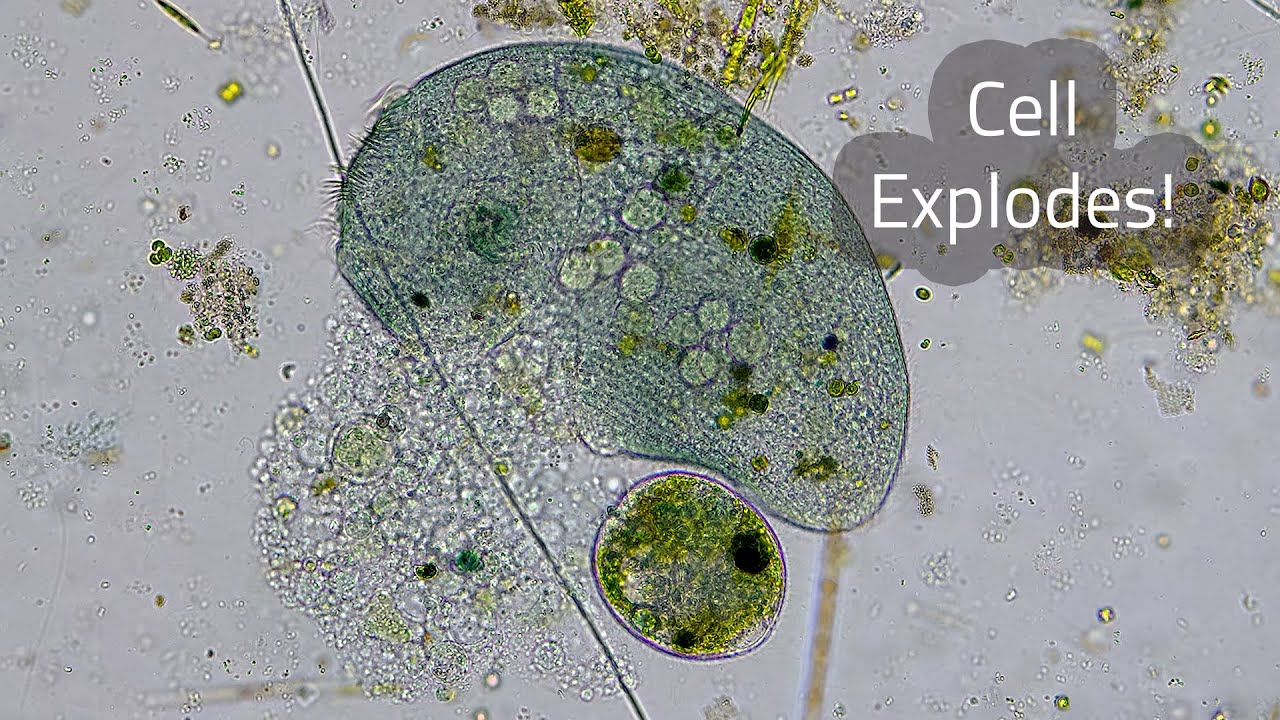 Vicious Microscopic Life