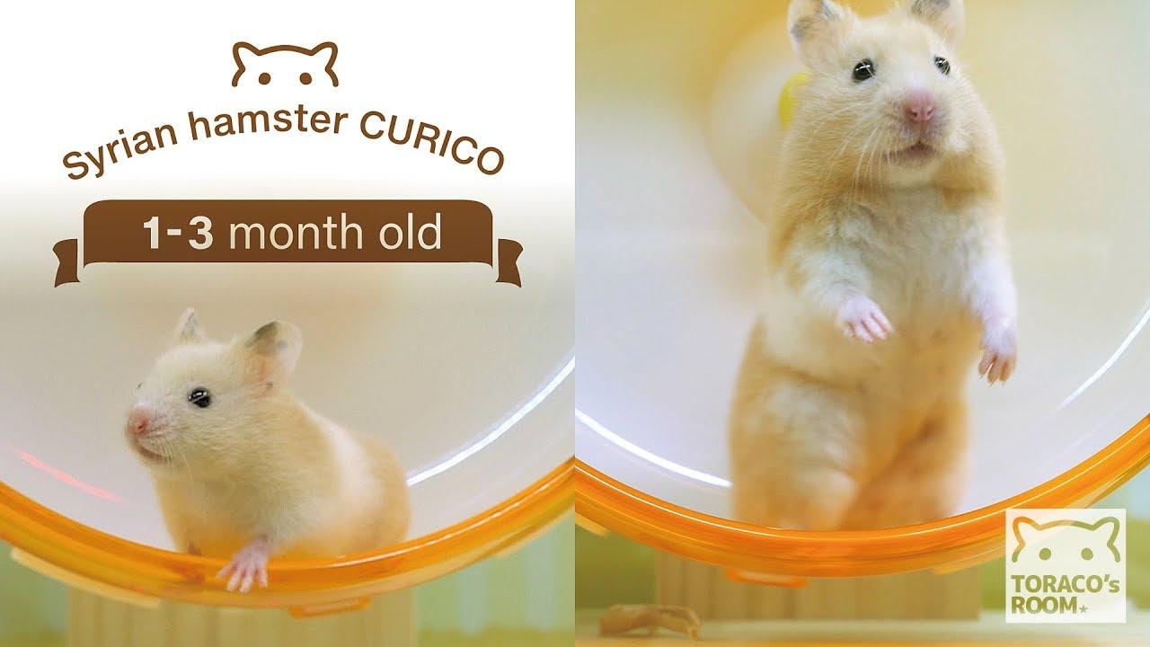 体重 ジャンガリアンハムスター 生後2ヶ月