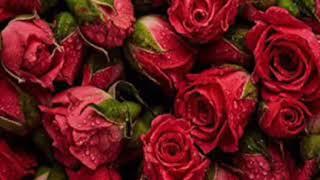 يا عاشقة الورد 🥀