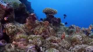 видео Растительный и животный мир Индийского океана