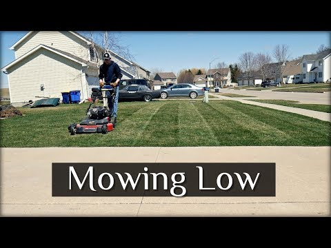 First Time Mowing Low on Front Yard + New Shed Project