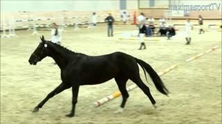 Авиньон-Виват. Шоу молодых лошадей. Продается!(Авиньон-Виват (Аристей-Флорибелла) продается голштинский мерин. Занял 2 место в шоу молодых лошадей!, 2015-09-30T12:53:17.000Z)