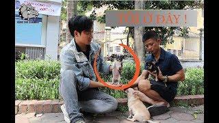 """[DOG REVIEW] Chihuahua - Giống chó """"đanh đá"""" nhất thế giới / Hùng Chó Channel"""