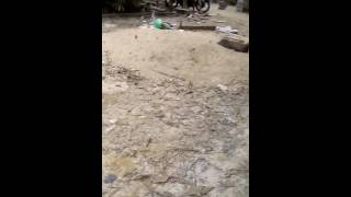 Download Video Video mesum adik vs kakak.di kebun MP3 3GP MP4