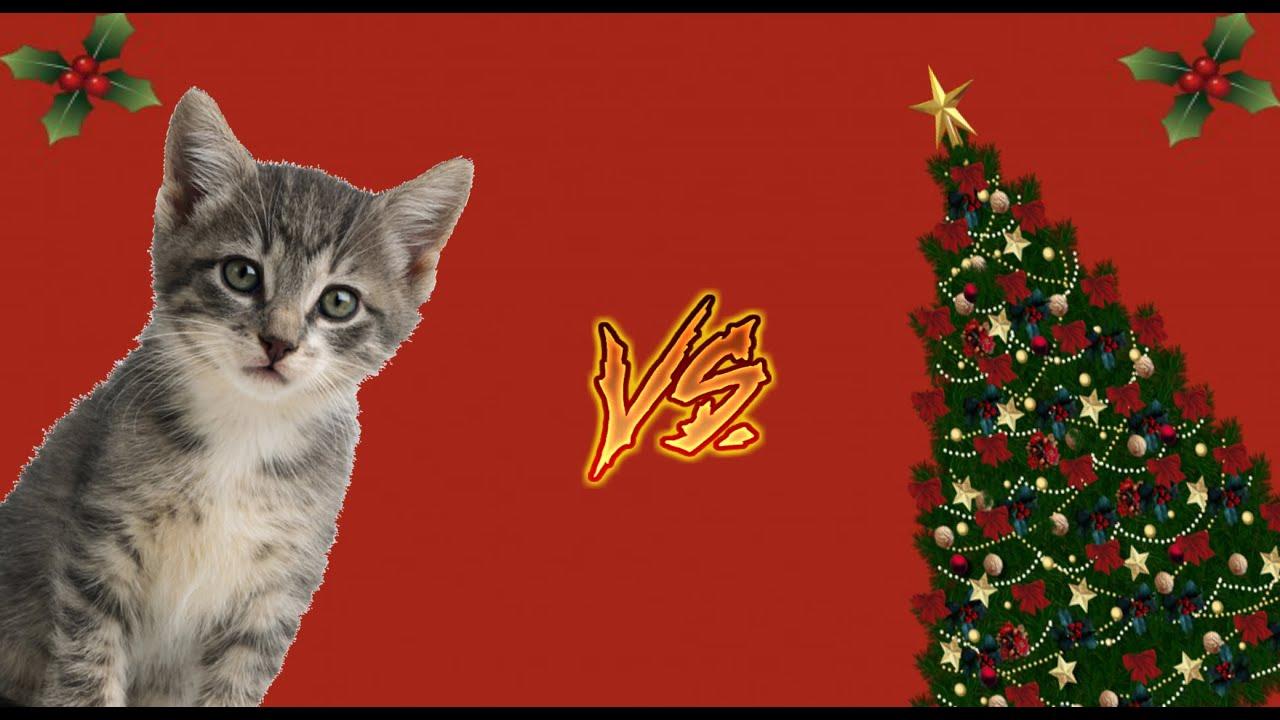 Video gracioso de gatos vs arboles de navidad vine de - Arboles de navidad de diseno ...