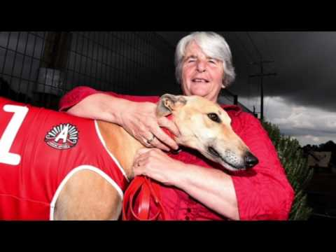 Victorian greyhound racing connecting with stakeholders and local communities