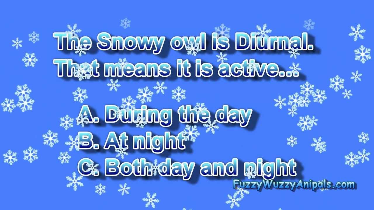 Snowy Owl Animal Quiz for Kids - YouTube